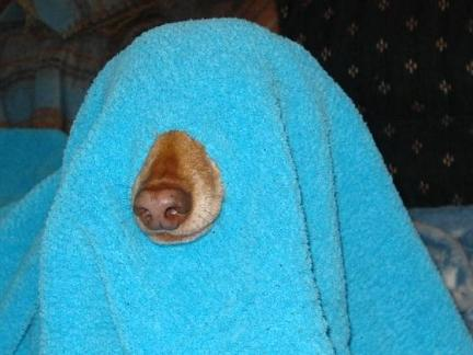 one hole niqab - burqa for dog