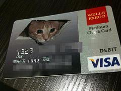 debit cat - I Can Haz Credit?