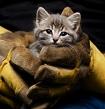 Top 10 Animal Rescue Sites