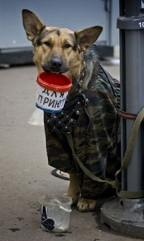 in russia even the dogs are poor