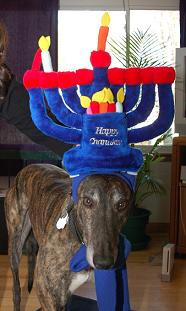 A Great Miracle Happened Here chanukah dog costume