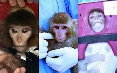 The pictures quite clearly show different monkeys, leading to speculation the space launch was a fake