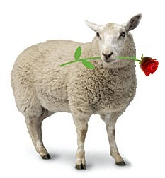 Muslim Love Sheep