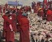 fake muslim atrocity