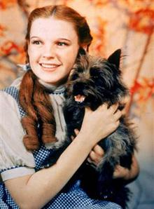 Toto is the name of a fictional dog in L. Frank Baum's Oz