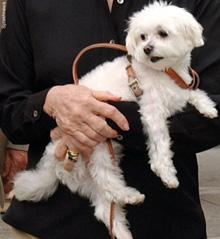 Trouble, the $12 Million dog.