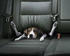 dog stuck in seat