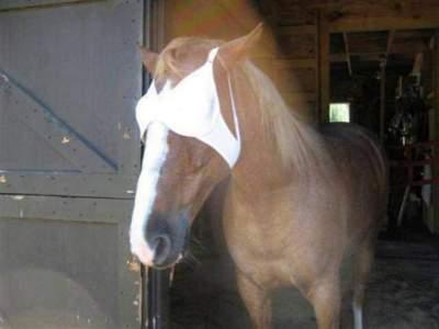 horse bra