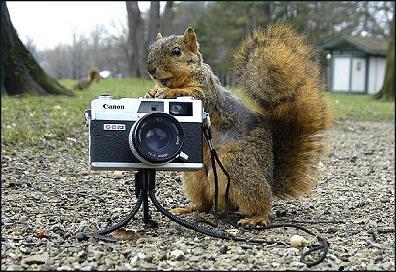 rare photograph florida squirrel