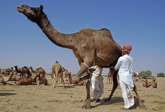 Zwei Arschlöcher auf einem Kamel #9