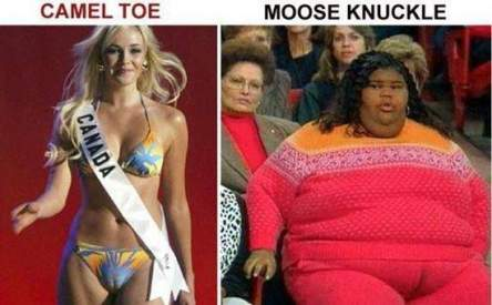 difference between camel-toe and mooseknuckle